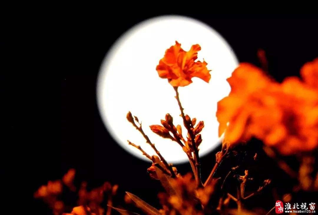 秋分祭月.jpeg